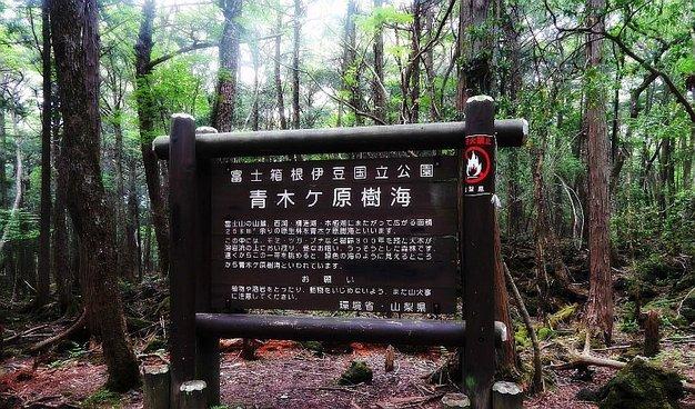 El bosque siniestro